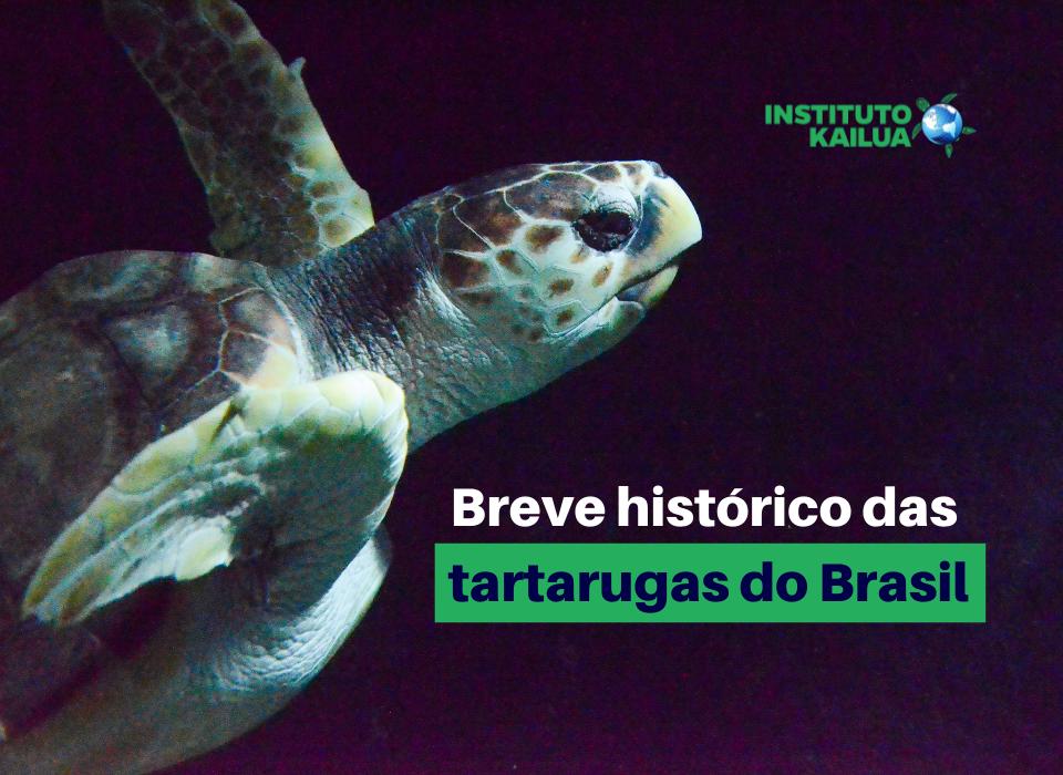 Devagar e Sempre – Um breve histórico das tartarugas do Brasil